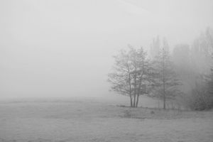 Snow or just fog? by Into-TheWild