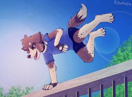 Parkour dog by Sharley102