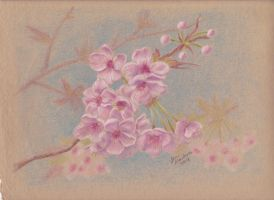 Cherry Blossoms by ArtisticAdventures