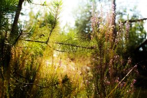 pine and heather by paracats