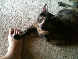 Cat's paw on my foot by 3Rockstar3