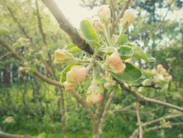 Apple tree blossom 2 by RandomEpicAlex