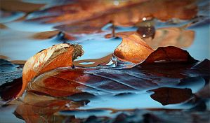 Autumn leaves floating on puddle by April-Mo