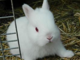 REW Netherland Dwarf Kit 5 by GhostRabbitry