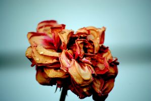 untitled flower by Mrs-Mims