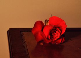 Rose on leather table by PaulWeber