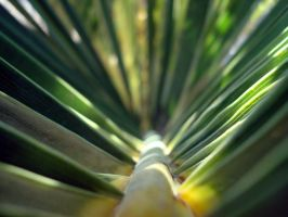 Palmtree close-up by WesleyGuijt