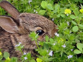 Baby Bunny by shadowcolors15
