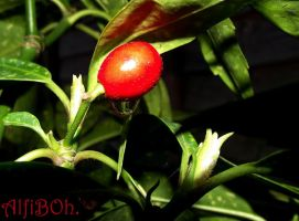 Berry Drop..2 by AlfiBOh