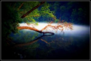 Dipping  Tree by tkrewson