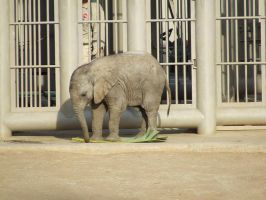 Baby Elephant 1 by dtf-stock