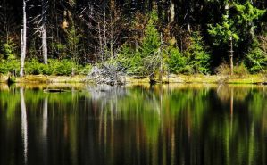 Reflecting Peace - cropped by ShilohsArts