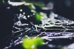 Cobwebs And Bokeh by FQPhotography