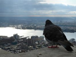 Empire State Building Pigeon by jelbo