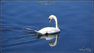 narciso by eross-666