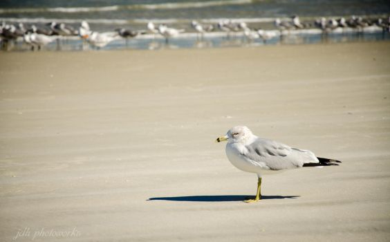 Gull on his own. by BoostedKnight