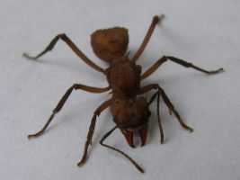 Fire ant by leona007