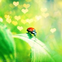 ladybug in love by all17