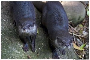 Otter Brothers by TVD-Photography