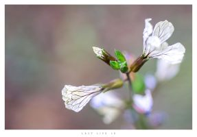 Last Life 15 by Nylons