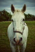Portrait of a Horse by silber-englein
