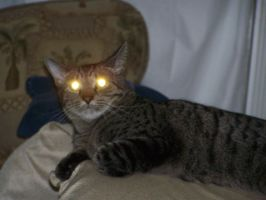 laser eye cat disapproves by CinnamintyAshes