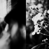 the ghostly kiss of flowers by PsycheAnamnesis