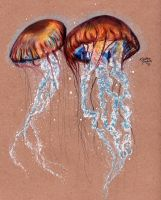 Pacific Sea Nettles by KristynJanelle