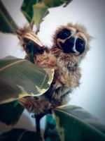 SOLD: Slothie Plushie by FaunleyFae
