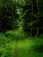 The Never Ending Forest Road D by Colior
