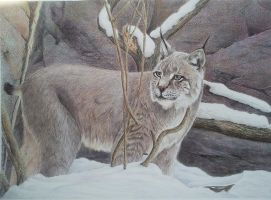 Canadian lynx by Leogon