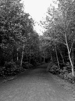 trail in the woods black-white by allyator