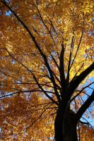 Golden Fall by kiles85