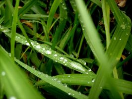 Waterdrops on grass. by Pillowbox