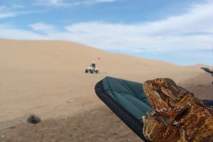 Beardie's View at Glamis Dunes by thebizzeebee