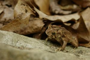 Toad on a Rock by dseomn