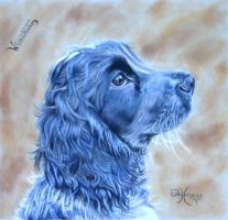 Blue Roan Cocker Spaniel by xxx-ellie