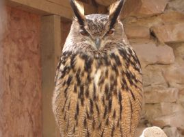 Eagle Owl 1 by thepapercraftcouple
