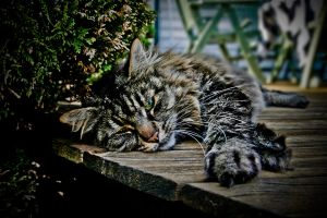 Relaxed by Mizth