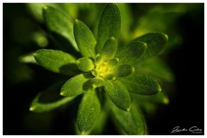 MACRO OF A PLANT by jaydoncabe