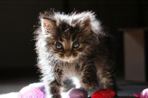 wednesday kitten backlight by docx