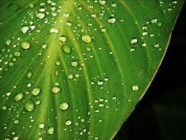 Rain Droplets by Fwee4