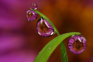 Dew Drop Refractions 6 by Alliec