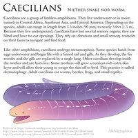 Science Fact Friday: Caecilians by Alithographica