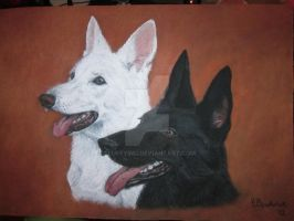 White and black German Shepherd by FluffyInu