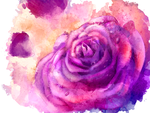 Watercolor rose by Thubakabra