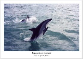 Dolphins by Galhad