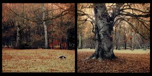 my past autumn by JuliaDunin
