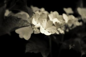 Flowers by thorneater