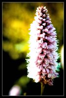 Just a flower by Andso